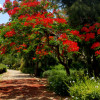 השדרה האדומה, אמנות של הטבע
