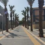 שדרת הדקלים בסמוך לאולם הספורט בחולון