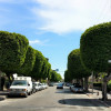 שדירת העצים היפה ברחוב חנקין