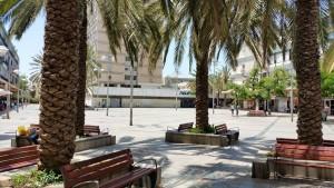 עצי הדקלים בכיכר ויצמן חולון