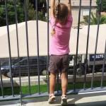 הגדר בגן צאלון
